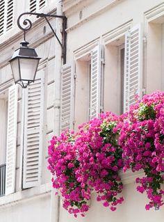 Juliette Balcony Flowers