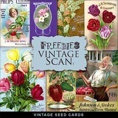New Freebies Kit - Vintage SEED Cards