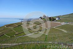 Lake Leman Vineyard And Lausanne Stock Photo - Image of towards, spring: 70998446 Lausanne, Travel Europe, Opera House, Vineyard, Spain, France, Stock Photos, City, Building