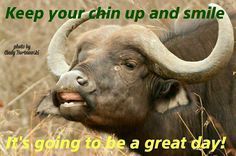 Kruger buffalo smile Keep Your Chin Up, Smile Photo, Buffalo, To Go, Day, Movies, Movie Posters, Pictures, Films
