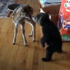Cute Wild Animals, Cute Little Animals, Cute Funny Animals, Animals Beautiful, Animals And Pets, Cute Cats, Funny Cats, Funny Husky, Happy Animals