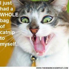 Love my catnip!