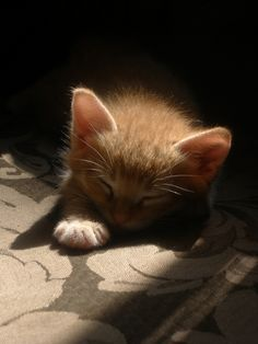 """.""""If there is one spot of sun spilling onto the floor a cat will find it and soak it up."""" --Jean Asper McIntosh  So true!."""