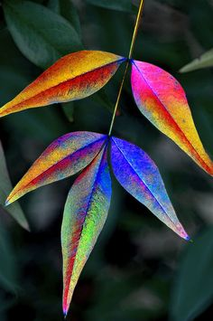 New fruit tree photography colour Ideas Tree Leaves, Plant Leaves, Tree Branch Tattoo, Let's Make Art, Ribbon On Christmas Tree, Tree Photography, Colour Photography, Watercolor Leaves, Best Fruits