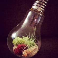 A little lightbulb terrarium is great to add some colour to your office desk or small spaces