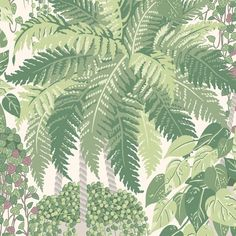 Cole and Son Botanicals Fern Wallpaper-Light Green - (115/7021) Fern Wallpaper, Pattern Wallpaper, Drops Patterns, String Of Pearls, Cole And Son, Glass House, Green Plants, Ferns, Lush