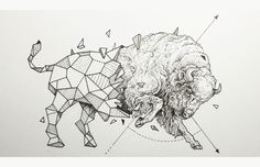 kerby rosanes tiger - Google Search