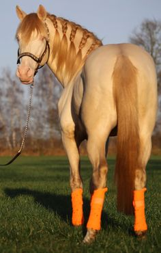 This horse has style. Striking unique coloring with a beautiful mane braided. I can't get over the beautiful color of this horse!