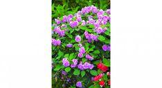 Plantes qui peuvent pousser à l'ombre - Mon Jardin Ma Maison