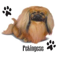Pekingese Dog HEAT PRESS TRANSFER for T Shirt Sweatshirt Tote Quilt Fabric #891c #AB