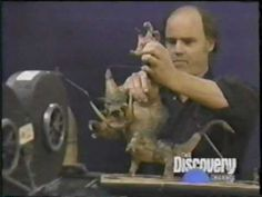 History of Stop Motion Animation Puppetry in Film - Part 1 of 3 - Willis O'Brian - Phil Tippett!!