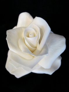 rose cake topper wedding bridal gumpaste by sweetpeasugarart, $30.00