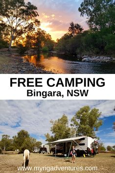 Bingara has three gorgeous FREE Camping areas along the Gwydir River. Horses will visit every day. self-contained vehicles only Places To Travel, Places To See, Travel Destinations, Travel Tips, Fiji Travel, Travel Oz, Adventure Activities, Australia Travel, Queensland Australia