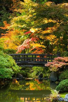 Moon Bridge in strolling pond garden (chisen kaiyu shiki niwa) of Portland Japanese Garden wi. Moon Bridge in strolling pond garden (chisen kaiyu shiki niwa) of Portland Japanese Garden with Fall colors in trees of red, yellow and orange
