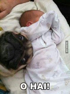 Oh hai!!! Pug photobomb
