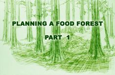 In permaculture design we utilize a method of design called analysis. When designing a food forest it wise to analyze and think through as much of the succession as possible of your forest (click...