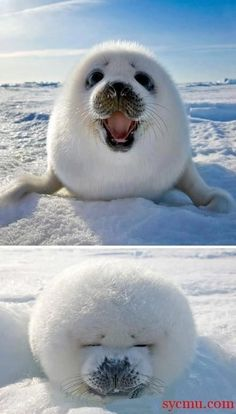 5 Cute Animal Photos To Cheer YouUp
