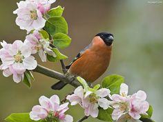Oficjalnie mamy wiosnę!   Pod linkiem znajdziecie kilka wyszukanych w internecie zdjęć, które pomogą zachować entuzjam w poniedziałek. Enjoy!