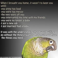 If you can live with a toddler for the next 30 to 50 years , then you're a bird person.  If you don't think you can live with anyone for that long , please , don't buy a bird. So many people want a large bird,( other than a budgie or a cockatiel) because, as I've heard , they're so cool!!!  not realizing and being prepared to live with a being with intelligence beyond most small children, they buy a macaw or a grey or an Amazon etc etc , not having any idea on personalities temperaments…
