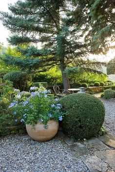 An iconic Provencal garden Provence Garden, Outdoor Gardens, Beautiful Gardens, Mediterranean Garden, Landscape Design, Outdoor Inspirations, Patio Garden, Lawn And Garden, Country Gardening