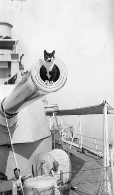 """Ship's """"Cat"""" HMS Cornwall heavy cruiser on February 1933 by Portsmouth Historic Dockyard Kittens Cutest, Cats And Kittens, Cute Cats, Funny Cats, Animals And Pets, Funny Animals, Cute Animals, Crazy Cat Lady, Crazy Cats"""