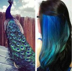Amazing Undercolor Hairstyles!