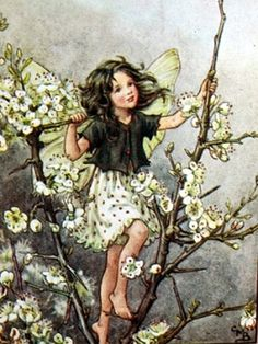 "Vintage print 'Blackthorn' by Cicely Mary Barker from ""Flower Fairies of the Winter""; with a biography of the author, Poems and Pictures by Cicely Mary Barker, Published by Blackie [Flower Fairies - Winter] Cicely Mary Barker, Fairy Paintings, Vintage Fairies, Beautiful Fairies, Fantasy Illustration, Illustration Flower, Garden Illustration, Flower Fairies, Fairies Garden"