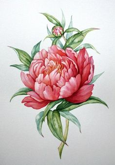 48 Ideas floral watercolor tattoo peonies for 2020 Botanical Flowers, Botanical Prints, Watercolor Flowers, Watercolor Paintings, Tattoo Watercolor, Peony Drawing, Peonies Tattoo, Decoupage Vintage, Botanical Drawings