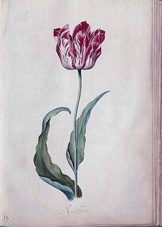 Tulpenboek in Frans Hals Museum. Judith Leyster (1609-1660) was de enige vrouwelijke schilder met een eigen werkplaats die lid was van het schildersgilde in Haarlem.