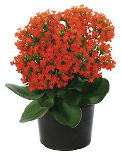81 Mejores Imagenes De Plantas De Interior Indoor Plants
