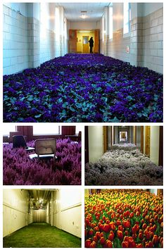 thousands of flowers installed in an abandoned mental asylum