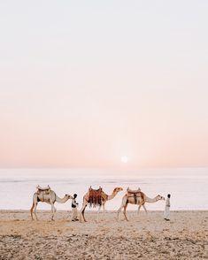 camel rides at sunset