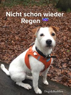 Hundeblog dogsundbuddies.com - Parson Russell Terrier - Mickey - Parson - Parson Russell - Terrier - Waldspaziergang - Vahlenhorst - Wald - Oldenburg - Niedersachsen - Hundeblogger - Dogblogger - Dogblog - Hundeblog