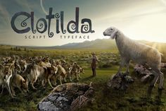 Clotilda Script Typeface By Ze Studio