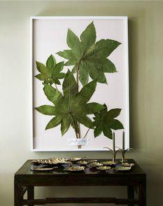 Refreshing & original, (extra large leaves) framed botanicals : DIY