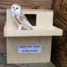 BOT frequently receives reports of owlets that have fallen from unsafe nest-places, usually from poorly-designed nestboxes. Our deep box is much safer for owlets than most designs due to a drop from the hole to the bottom. Owl Box, Bird House Plans, Funky Junk, Small Birds, Owl House, Bird Houses, Farm Animals, Bird Feeders, Habitats