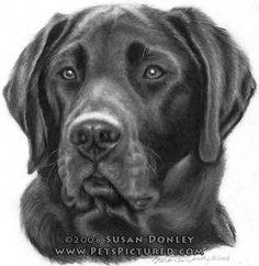 Drawing Portrait Diesel, black Labrador Retriever - 2009 Susan K Donley Labrador Retriever Negro, Raza Labrador, Labrador Retrievers, Perros Rat Terrier, Animal Paintings, Animal Drawings, Homeless Dogs, Working Dogs, Dog Portraits