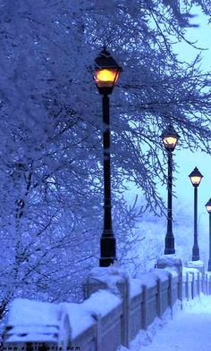 Blue Evening - at dusk this is a special time when the coloring of the snowy day changes to a deep bluish grey. Winter Pictures, Great Pictures, Beautiful Pictures, I Love Snow, I Love Winter, Snow Scenes, Winter Scenes, Winter Christmas, Winter Snow