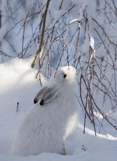 Bunny in snow in winter wonder land Winter Szenen, Winter Magic, Winter White, Snow White, Winter Coat, Winter Fairy, Beautiful Creatures, Animals Beautiful, Winter Wonderland