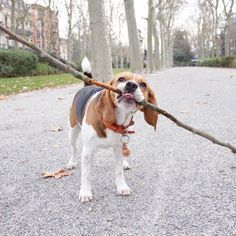 Beagle branch manager