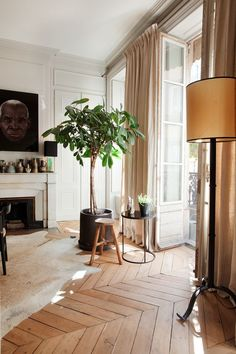 Neutral living room design in white, beige, and tan featuring pale wood herringbone pattern floors, a hide rug, and a large potted fig tree - Neutral Home Ideas & Decor