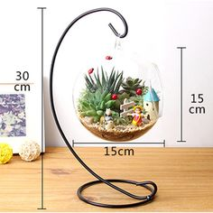 12 Inch 30cm Hanging Holder Crystal Terrarium Container Without Glass – Mitilen.com
