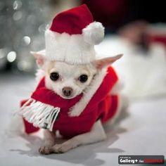 Estes Bichinhos Estão Prontos Para o Natal!