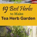 Herbal teas from freshly picked aromatic herb leaves can be a healthy addition into your diet and it is a good idea look at these 19 best tea herbs that you can grow in your home and garden. Growing Tea, Tea Herbs, Tea Plant, Homemade Tea, Herbal Teas, Aromatic Herbs, Best Tea, How To Make Tea, Herb Garden