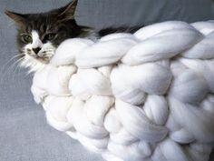How to make a chunky Merino wool cat bed in 20 minutes. BeCozi - YouTube