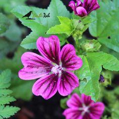 KräuterRabe, Rätsel, Gewinnspiel, Pflanzen erkennen, Überraschungspäckchen