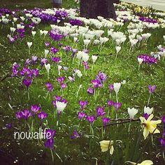 ��#happyweekend  to all ��Günaydın, mutlu keyifli hafta sonları! �� #flowers #garden #plants #park #nowalife #photo #shot #pic #foto #travel #trip #voyage #gezi #seyahat #yolculuk #bahçe #çiçek #park  #nature #doğa #artofnature http://turkrazzi.com/ipost/1518669514107463856/?code=BUTZeB3lyiw
