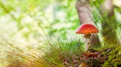 A pszilocibin több száz gombafajban is megtalálható a természetben