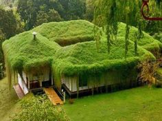 """BBC Boracay says: """" We like the idea of Green Living and try to use the ideas in our constructions - Here a 'sod' roof .in harmony with nature. Earthship, Living Roofs, Unusual Homes, Green Architecture, Green Building, Go Green, Green Grass, Home And Garden, Exterior"""