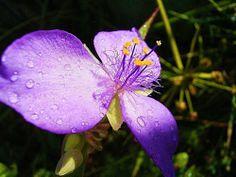 Purple by VLG Budde - Nature Up Close Flowers - 2011-2013 ( macro, nature, purple, art, vlg, flower )
